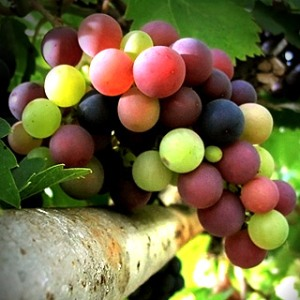Frutta autunno
