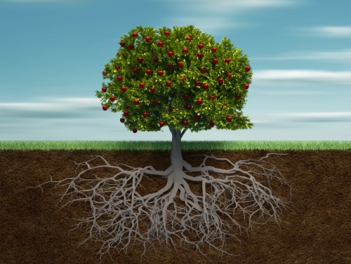 Tree-with-Roots-e1367263221857